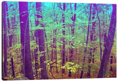 Psychedelic Forest Canvas Art Print