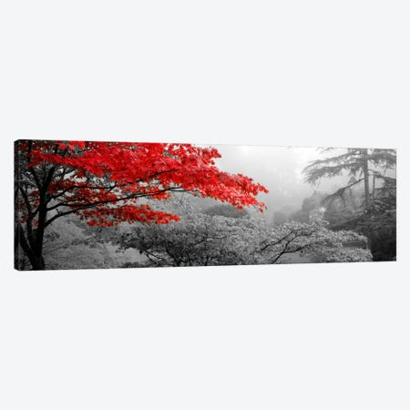 Trees in a garden, Butchart Gardens, Victoria, Vancouver Island, British Columbia, Canada Color Pop Canvas Print #ICA1189} by Panoramic Images Canvas Art