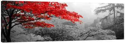 Trees in a garden, Butchart Gardens, Victoria, Vancouver Island, British Columbia, Canada Color Pop Canvas Art Print
