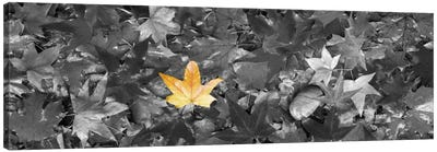 Maple leaves Color Pop Canvas Art Print