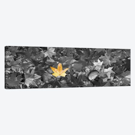 Maple leaves Color Pop Canvas Print #ICA1190} by Panoramic Images Canvas Art Print