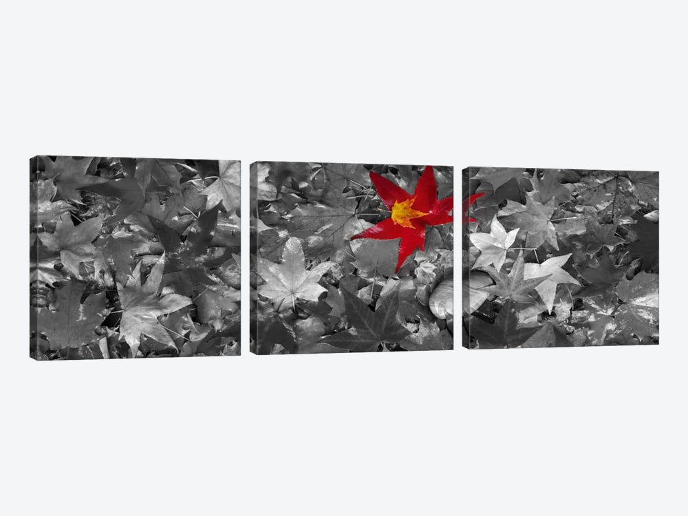 Maple leaves Color Pop #2 by Panoramic Images 3-piece Canvas Wall Art