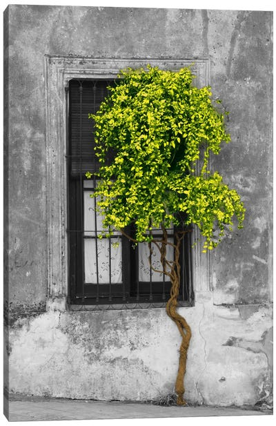 Tree in Front of Window Green Pop Color Pop Canvas Art Print