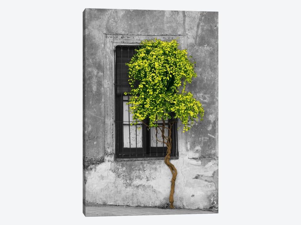 tree in front of window green pop color pop art print