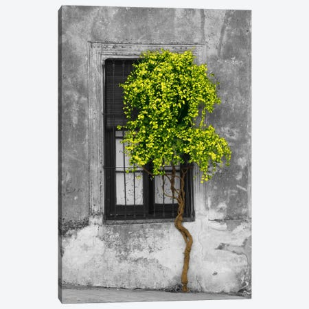 Tree in Front of Window Green Pop Color Pop Canvas Print #ICA1205} by Panoramic Images Canvas Wall Art