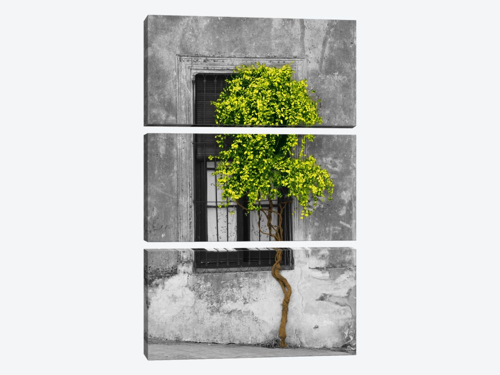 Tree in Front of Window Green Pop Color Pop by Panoramic Images 3-piece Art Print