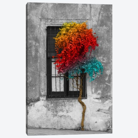 Tree in Front of Window Rainbow Pop Color Pop Canvas Print #ICA1206} by Panoramic Images Canvas Artwork
