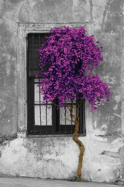 Tree In Front Of Window Purple Pop Color Pop Canvas Art | ICanvas