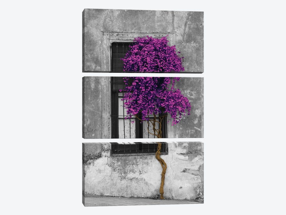 Tree in Front of Window Purple Pop Color Pop by Panoramic Images 3-piece Canvas Art Print