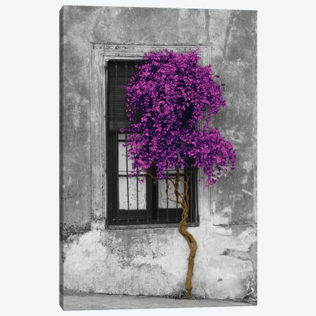 Tree in Front of Window Purple Pop Color Pop 3-Piece Canvas #ICA1207} by Panoramic Images Canvas Artwork