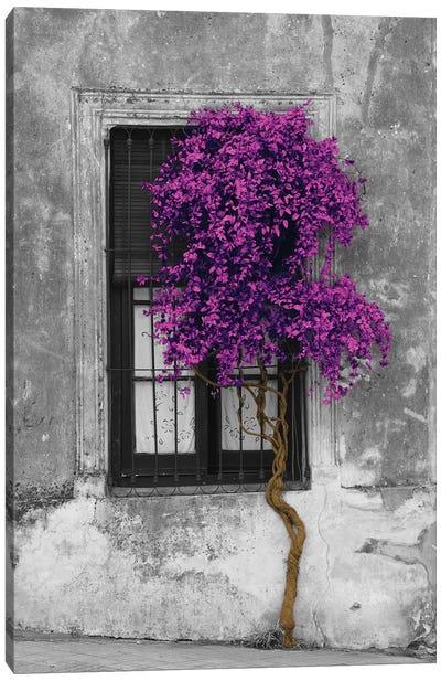 Tree in Front of Window Purple Pop Color Pop Canvas Art Print
