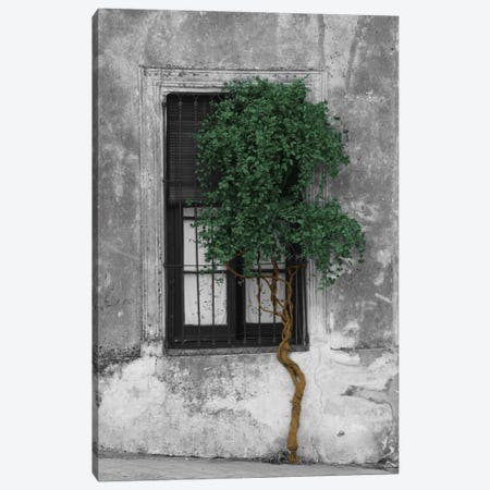 Tree in Front of Window Evergreen Pop Color Pop Canvas Print #ICA1208} by Panoramic Images Canvas Print