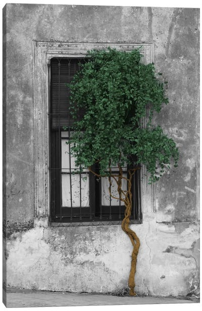 Tree in Front of Window Evergreen Pop Color Pop Canvas Art Print