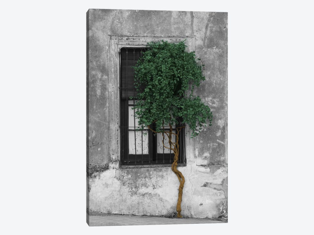 Tree in Front of Window Evergreen Pop Color Pop by Panoramic Images 1-piece Canvas Art