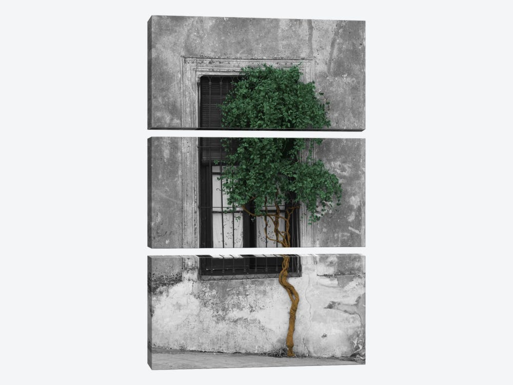 Tree in Front of Window Evergreen Pop Color Pop by Panoramic Images 3-piece Canvas Wall Art