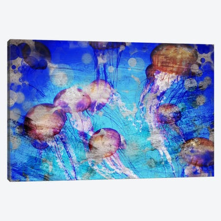 Jellies Canvas Print #ICA124} by Unknown Artist Canvas Wall Art