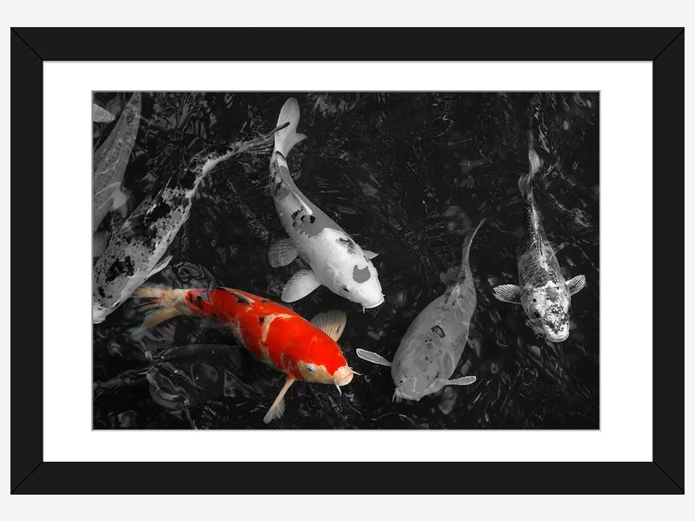 Koi carp in japan color pop framed print icanvas for Koi carp wall art