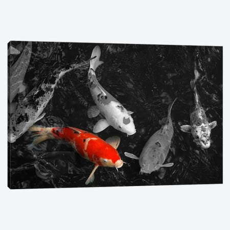 Koi Carp In Japan Color Pop Canvas Print #ICA1262} by Unknown Artist Canvas Art Print