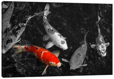 Koi Carp In Japan Color Pop Canvas Art Print