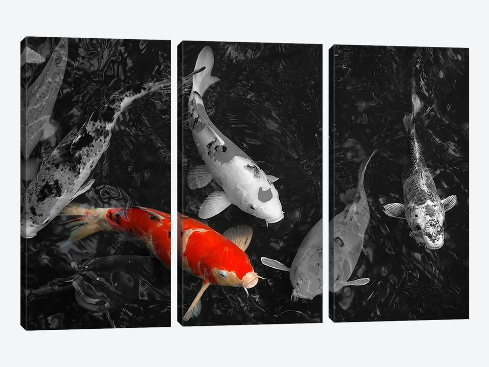 Koi Carp In Japan Color Pop 3-piece Canvas Artwork