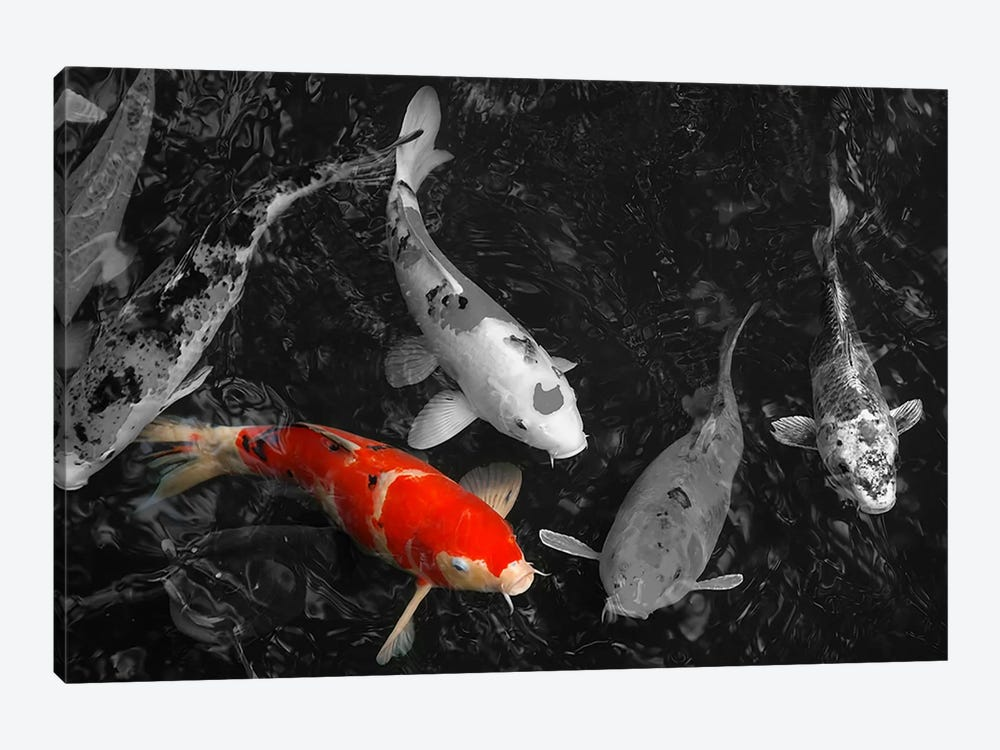 Koi Carp In Japan Color Pop by Unknown Artist 1-piece Canvas Wall Art
