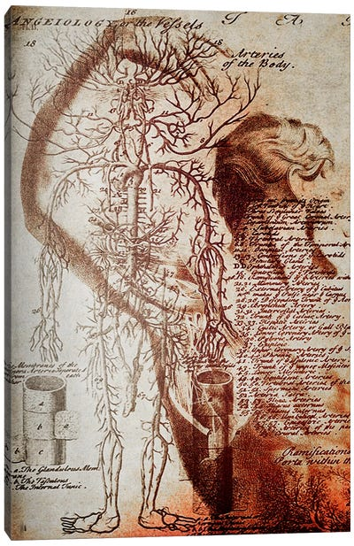 Victorian Anatomy Canvas Art Print