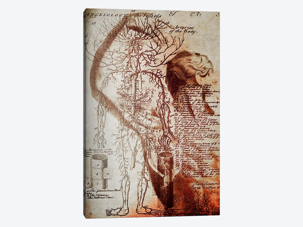 Victorian Anatomy by Unknown Artist 1-piece Art Print