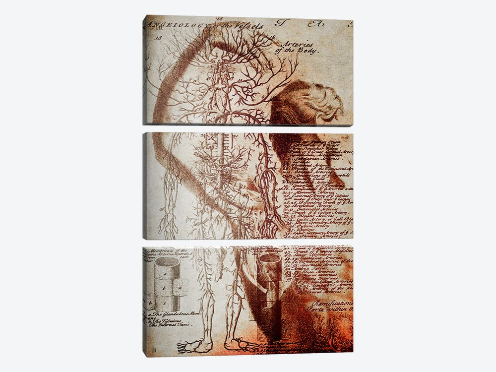Victorian Anatomy by Unknown Artist 3-piece Art Print