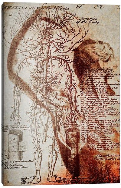 Victorian Anatomy Canvas Art Print