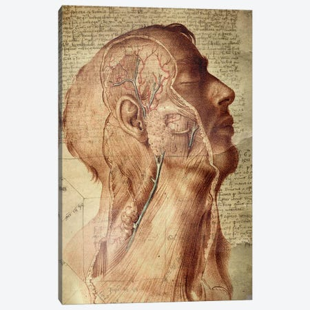Vascular Mind Canvas Print #ICA1323} by Unknown Artist Canvas Wall Art