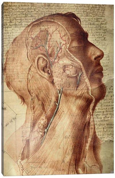Vascular Mind Canvas Art Print