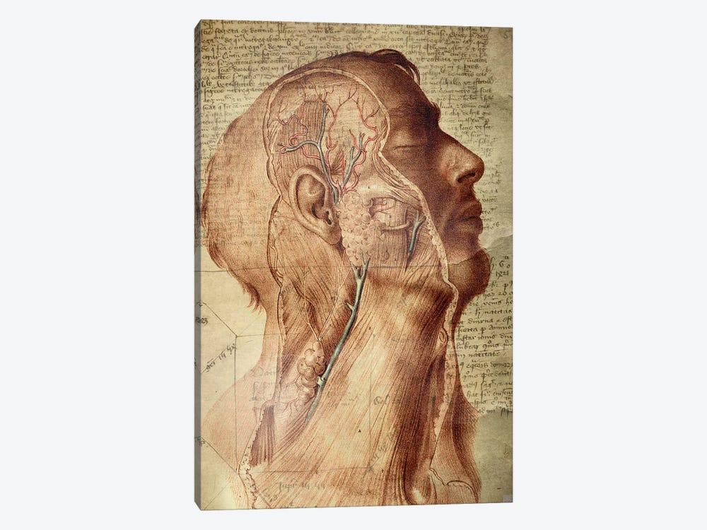 Vascular Mind by Unknown Artist 1-piece Canvas Wall Art