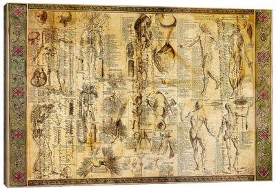 Anatomical Chart Canvas Art Print