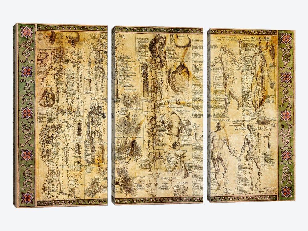 Anatomical Chart by Unknown Artist 3-piece Canvas Art