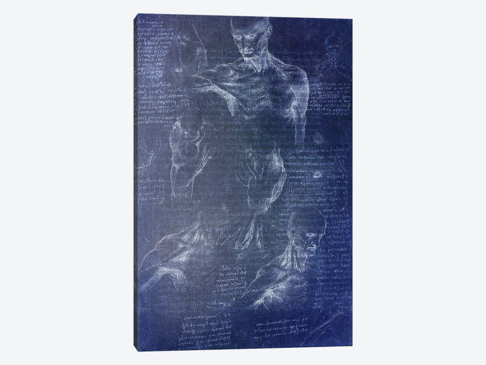Anatomical Blueprint I 1-piece Canvas Print