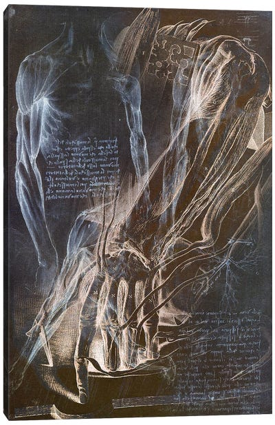 Anatomical Blueprint II Canvas Art Print