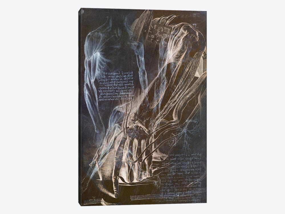 Anatomical Blueprint II by iCanvas 1-piece Canvas Wall Art
