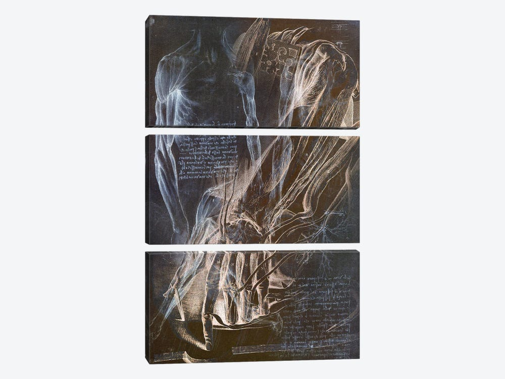 Anatomical Blueprint II by iCanvas 3-piece Canvas Artwork