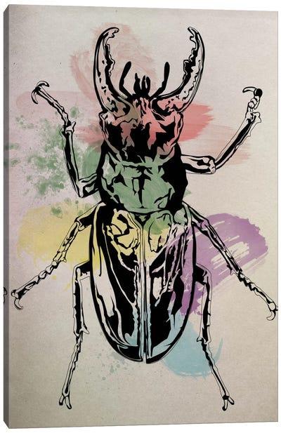 Beetle Specimine Canvas Art Print