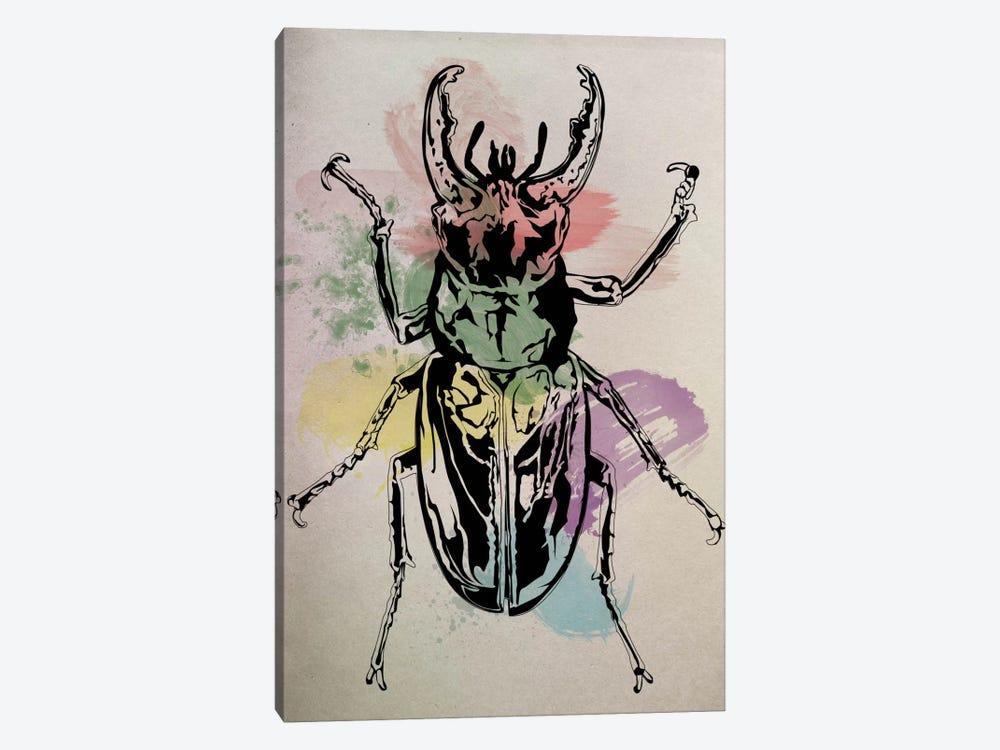 Beetle Specimine by Unknown Artist 1-piece Canvas Art Print