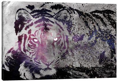 Dusk Tiger Canvas Print #ICA268