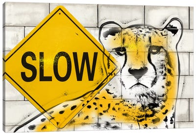 Slow Cheetah Playing Canvas Art Print