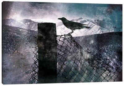 Night Raven Canvas Print #ICA538