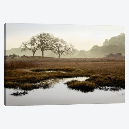 Island Oak Trees Canvas Print #ICS106} by Alan Blaustein Canvas Wall Art
