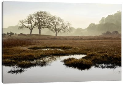 Island Oak Trees Canvas Art Print