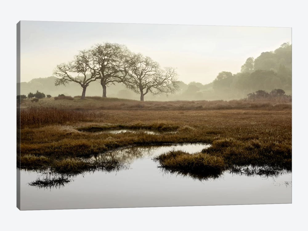 Island Oak Trees by Alan Blaustein 1-piece Art Print