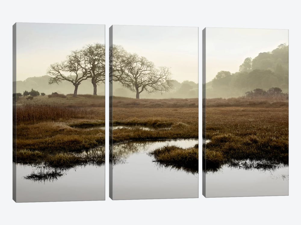 Island Oak Trees by Alan Blaustein 3-piece Canvas Art Print