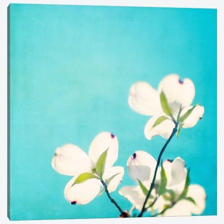 A Life So Colorful Canvas Print #ICS112} by Carolyn Cochrane Canvas Wall Art