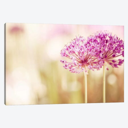 Bloom Canvas Print #ICS114} by Carolyn Cochrane Art Print