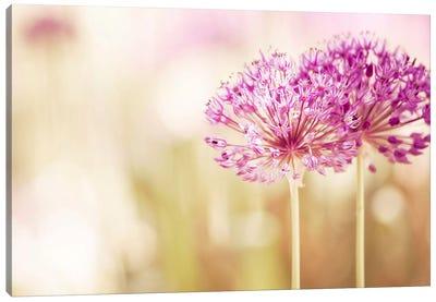 Bloom Canvas Print #ICS114